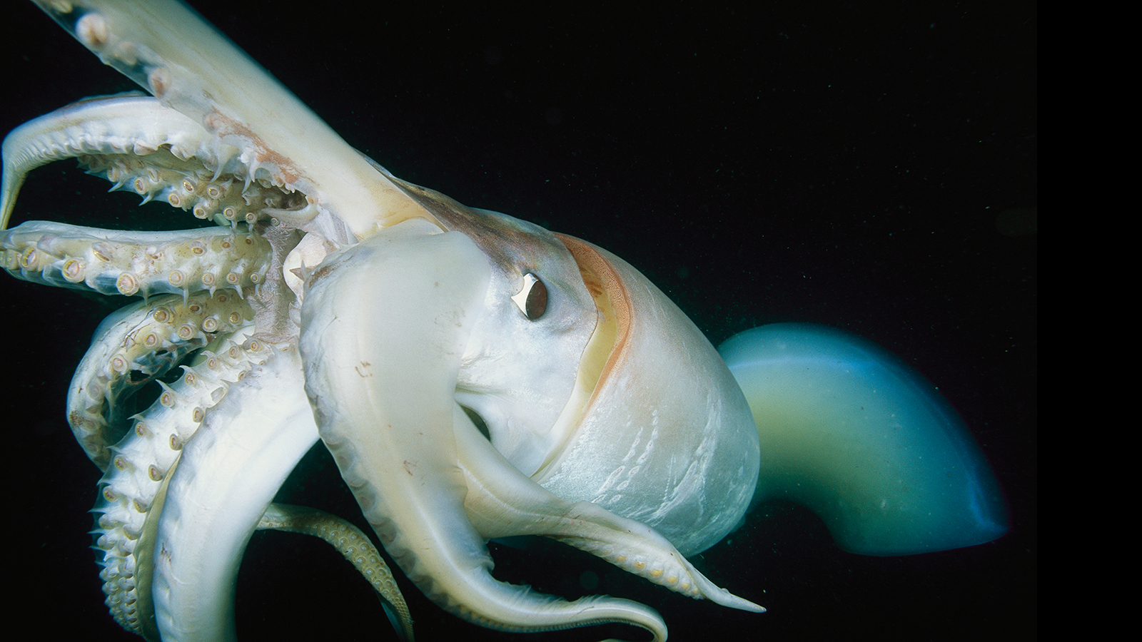 Do Giant Squids Really Exist We Know That They Do And Where They