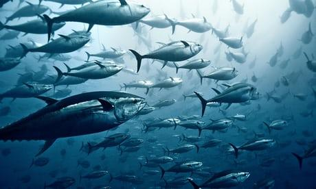Tuna Fisheries