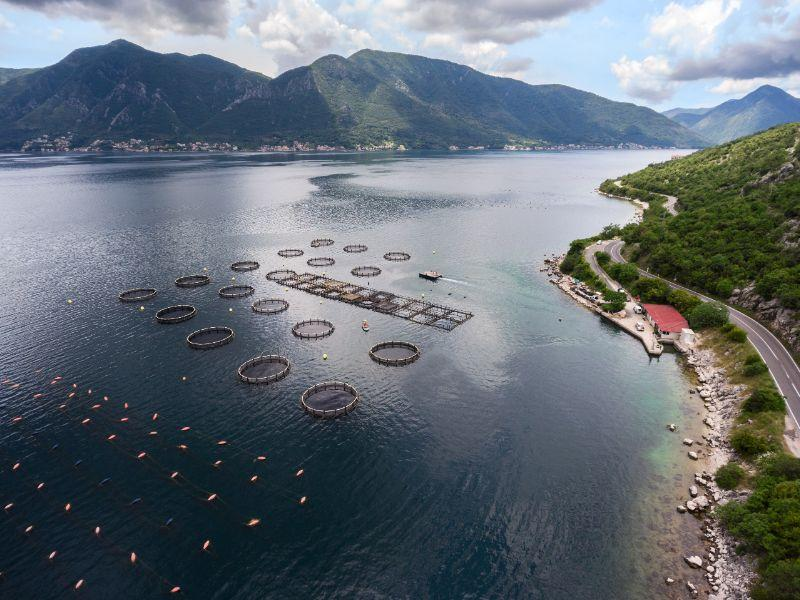 Coastal Aquaculture Ponds